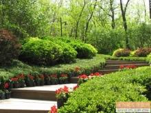 闫山山体公园景观绿化工程