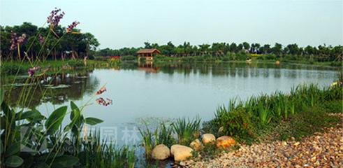 丰县故黄河湿地公园二期工程